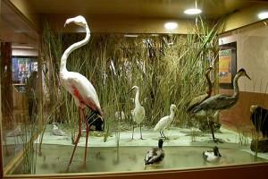 Museo de Biodiversidad de Ibi